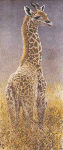 Young Giraffe- Signed By The Artist – PaperLithograph – Limited Edition – 290S/N – 36x16 –