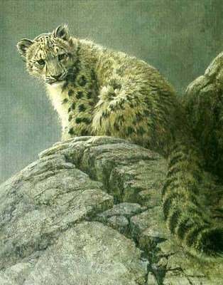 Young Snow Leopard- Signed By The Artist – PaperLithograph – Limited Edition – 950S/N – 19 5/8x15 3/4