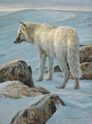 Arctic Evening – White Wolf- Signed By The Artist								 – Paper Lithograph – Limited Edition – 950 S/N – 19 5/8 x 15