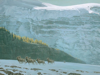 Big Horn Sheep Herd- Signed By The Artist – PaperLithograph – Limited Edition – 650S/N – 22 1/2x30