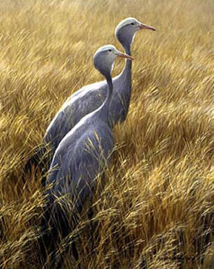 Blue Cranes – Sappi Portfolio- Signed By The Artist								 – Paper Lithograph – Limited Edition – 550 S/N – 20 x 16 3/4