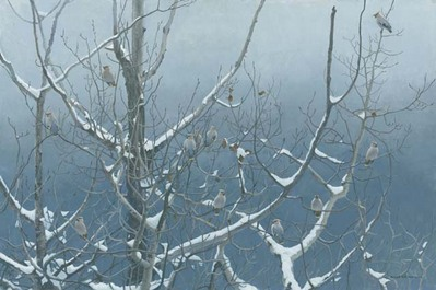 Bohemian Waxwings And Poplar- Signed By The Artist								 – Canvas Giclee – Limited Edition – 40 A/P – 14 x 21