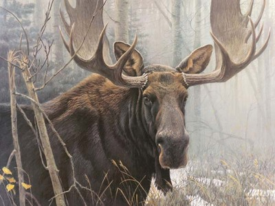 Bull Moose- Signed By The Artist								 – Paper Lithograph – Limited Edition – 950 S/N – 18 1/2 x 25