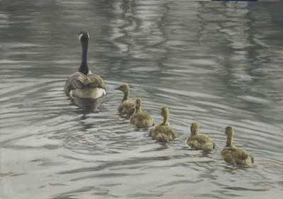 Canada Goose And Goslings- Signed By The Artist – CanvasGiclee – Limited Edition – 40A/P – 10x14