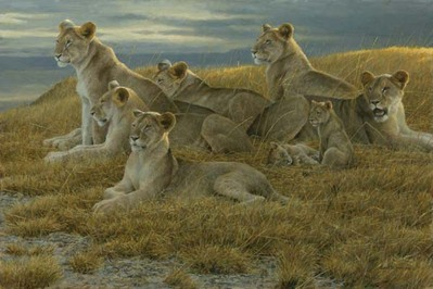 Family Gathering – Lioness And Cubs- Signed By The Artist – PaperLithograph – Limited Edition – 76A/P – 17 1/2x26 1/4
