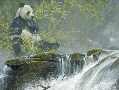 Giant Panda- Signed By The Artist								 – Canvas Giclee – Limited Edition – 40 A/P – 29 x 38