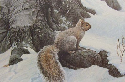 Gray Squirrel- Signed By The Artist – PaperLithograph – Limited Edition – 950S/N – 17x25 1/2 –