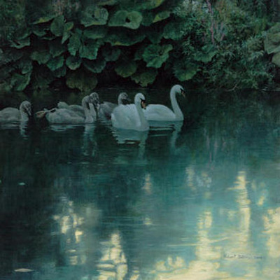 Great Dunford Mute Swans- Signed By The Artist – PaperLithograph – Limited Edition – A/P – 17x17
