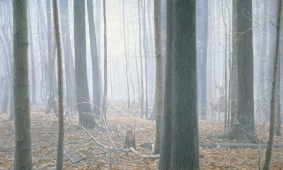 Hardwood Forest – Whitetail Deer- Signed By The Artist								 – Canvas Giclee – Limited Edition – 180 S/N – 24 x 40