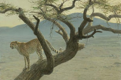 Lewa Cheetah- Signed By The Artist – PaperLithograph – Limited Edition – 76A/P – 17 1/2x26 1/4