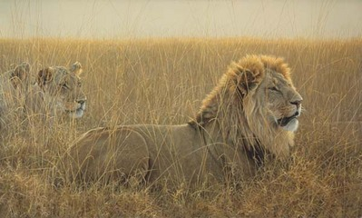 Lions In The Grass- Signed By The Artist – CanvasGiclee – Limited Edition – 180S/N – 24x40