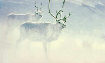 Peary Caribou- Signed By The Artist – PaperLithograph – Limited Edition – 450S/N – 15x22 3/4