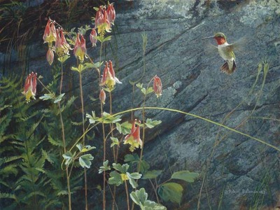 Ruby-Throat And Columbine- Signed By The Artist								 – Canvas Giclee – Limited Edition – 40 A/P – 12 x 16