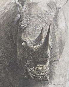 White Rhinoceros – Sappi Portfolio- Signed By The Artist – PaperLithograph – Limited Edition – 550S/N – 20x16 3/4