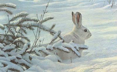 Winter – Snowshoe Hare- Signed By The Artist – PaperLithograph – Limited Edition – 950S/N – 13 1/2x21