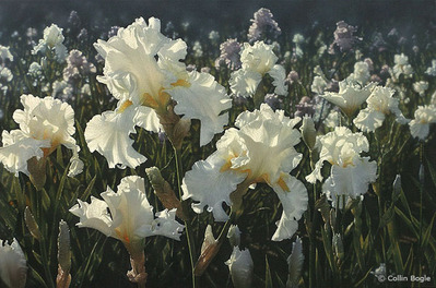 White Iris Garden- Signed By The Artist – CanvasGiclee – Limited Edition – A/P – 21x14