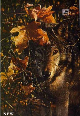 Autumn Eyes- Signed By The Artist – PaperLithograph – Limited Edition – 195S/N – 20x14