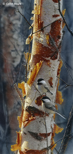 Sunlit Birch II- Signed By The Artist – CanvasGiclee – Limited Edition – 250S/N – 18 3/4x9