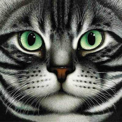 American Shorthair- Signed By The Artist								 – Paper Lithograph – Limited Edition – 175 S/N – 8 x 8 –