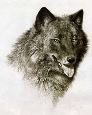 Black Wolf- Signed By The Artist – PaperLithograph – Limited Edition – 1500S/N – 12x9 1/2