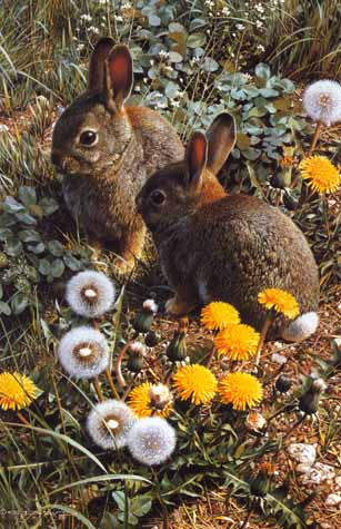Colorful Playground – Cottontails- Signed By The Artist – PaperLithograph – Limited Edition – 950S/N – 18 1/8x11 7/8 –