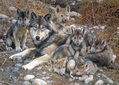 Den Mother – Wolf Family- Signed By The Artist – CanvasGiclee – Limited Edition – 195S/N – 26x36