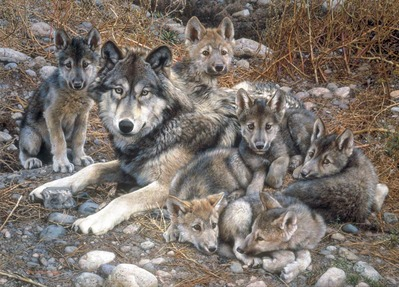 Den Mother – Wolf Family – Premier Edition- Signed By The Artist – PaperLithograph – Limited Edition – 450S/N – 22 3/4x31 3/4