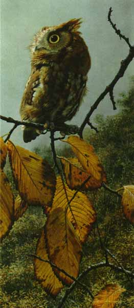 Fireball – Screech Owl- Signed By The Artist – PaperLithograph – Limited Edition – A/P – 23x10 –