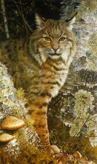 Forest Sentinel – Bobcat- Signed By The Artist – PaperLithograph – Limited Edition – 950S/N – 26 1/4x15 7/8