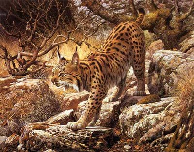 Ghostly Quiet – Spanish Lynx- Signed By The Artist – PaperLithograph – Limited Edition – 1950S/N – 18 5/8x23 3/4