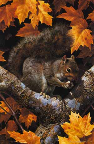 Golden Season – Gray Squirrel- Signed By The Artist – PaperLithograph – Limited Edition – 950S/N – 18 1/4x12