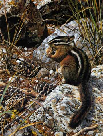 Harvest Time – Chipmunk- Signed By The Artist – PaperLithograph – Limited Edition – 950S/N – 10 1/2x7 3/8