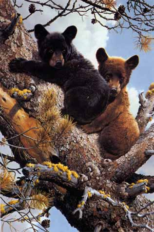 High Adventure – Black Bear Cubs- Signed By The Artist – PaperLithograph – Limited Edition – 950S/N – 20 1/2x14