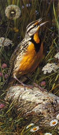 Meadowlark- Signed By The Artist – PaperLithograph – Limited Edition – 20P/P – 12 1/2x5 1/2 –
