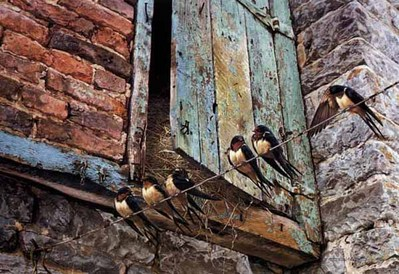 Migration Fever – Barn Swallows- Signed By The Artist – PaperLithograph – Limited Edition – 950S/N – 19 1/8x28 3/8 –