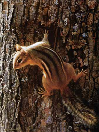 Narrow Escape – Chipmunk- Signed By The Artist – PaperLithograph – Limited Edition – 1750S/N – 11 3/4x8 7/8