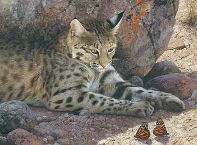Off Limits – Bobcat- Signed By The Artist – PaperLithograph – Limited Edition – 950S/N – 20 7/8x28 1/4