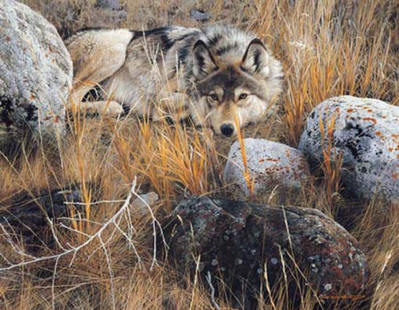One To One – Gray Wolf- Signed By The Artist – CanvasGiclee – Limited Edition – 30A/P – 31x40 –
