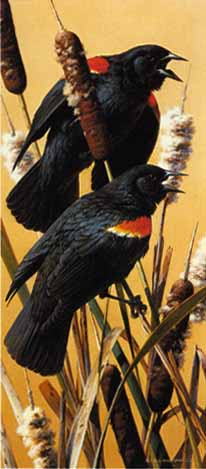 Red-Winged Blackbirds- Signed By The Artist – PaperLithograph – Limited Edition – 20P/P – 12 1/2x5 1/2