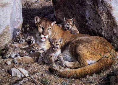 Rocky Camp – Cougar Family- Signed By The Artist – PaperLithograph – Limited Edition – 5000S/N – 21 1/4x28 7/8