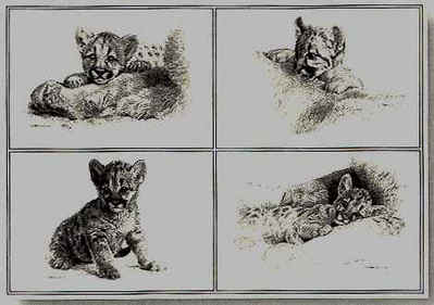 Rocky Camp Cubs- Signed By The Artist – PaperLithograph – Limited Edition – 76A/P – 13x19
