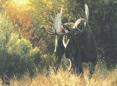 Sudden Encounter – Bull Moose- Signed By The Artist – CanvasLithograph – Limited Edition – 350S/N – 27x38