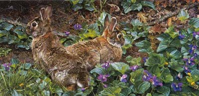 Violet Trails And Cottontails- Signed By The Artist – PaperLithograph – Limited Edition – 2500S/N – 12x24 1/4