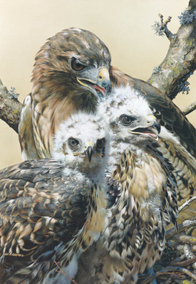 Wisdom And Innocence- Signed By The Artist								 – Canvas Giclee – Limited Edition – A/P – 26 x 18
