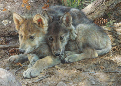 Brotherly Love – Wolf Pups- Signed By The Artist								 – Paper Lithograph – Limited Edition – 76 A/P – 9 x 12 1/2