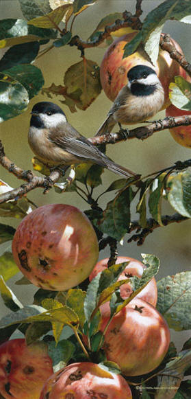 Chickadees And Apple Tree- Signed By The Artist – CanvasGiclee – Limited Edition – 180S/N – 19x9