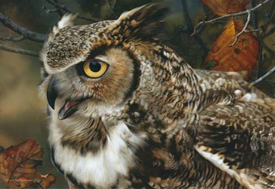 In Focus – Great Horned Owl- Signed By The Artist – CanvasGiclee – Limited Edition – 40A/P – 14x20