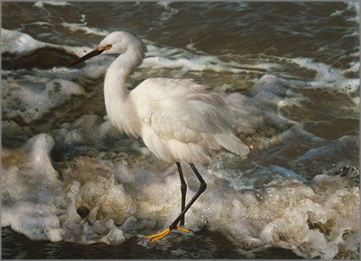 Island Shores – Snowy Egret- Signed By The Artist – PaperLithograph – Limited Edition – 2500S/N – 20 5/8x28 3/8