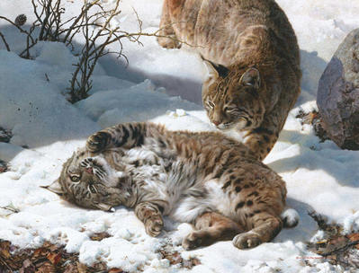 Love Is In The Air – Bobcats- Signed By The Artist – PaperLithograph – Limited Edition – 650S/N – 22 3/4x29 3/4