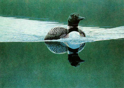 Breaking The Calm – Common Loon- Signed By The Artist								 – Paper Lithograph – Limited Edition – 23 A/P – 20 x 27 3/4